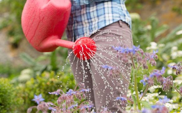 cuidados com o jardim